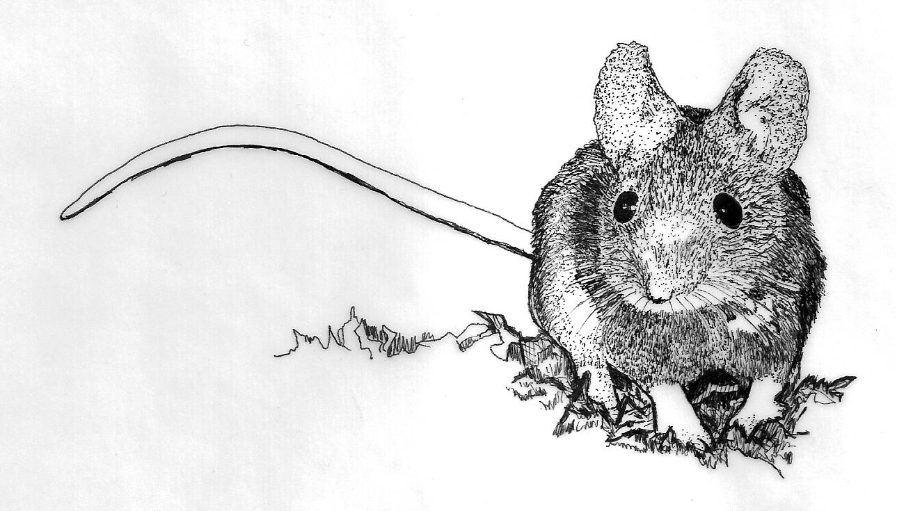 elizparsons-mouse-001