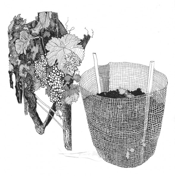Grapevine and Composter
